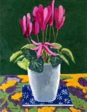 Cyclamen on a table