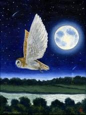nightowloil
