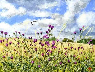Knapweed and red kites on a windy day